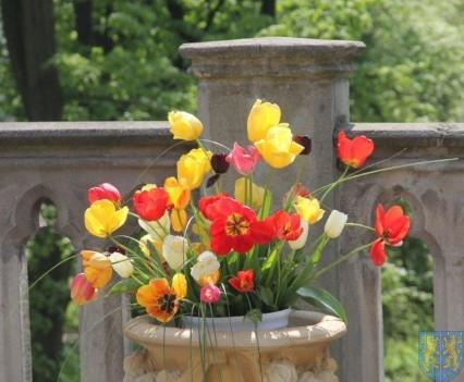 Święto Tulipanów 2017 sobota (7)