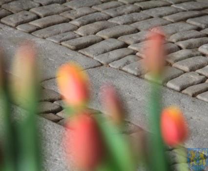 Święto Tulipanów 2017 sobota (89)