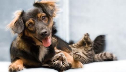 Pomóż zwierzakowi