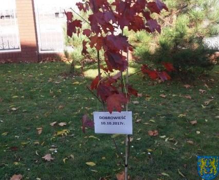Dzień drzewa wskazuje na przyszłość (2)