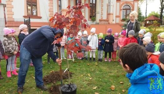 Dzień drzewa wskazuje na przyszłość