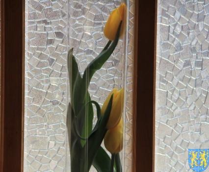 Kamieniecka Wiosna Tulipanów 2018 kronika (177)