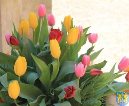 Kamieniecka Wiosna Tulipanów 2018 kronika (234)