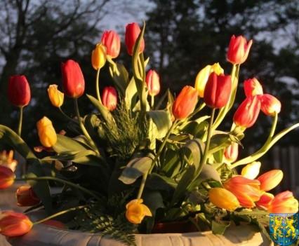 Kamieniecka Wiosna Tulipanów 2018 kronika (581)