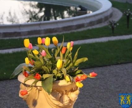Kamieniecka Wiosna Tulipanów 2018 kronika (585)
