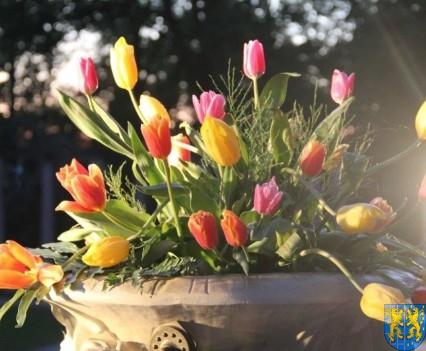 Kamieniecka Wiosna Tulipanów 2018 kronika (586)