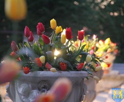 Kamieniecka Wiosna Tulipanów 2018 kronika (589)