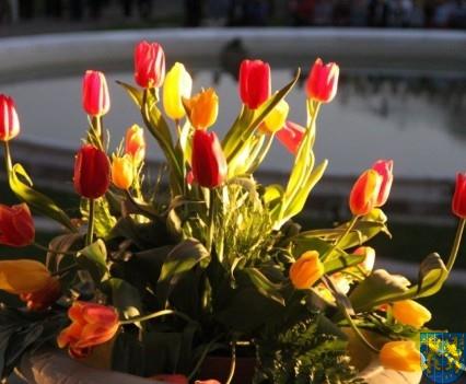 Kamieniecka Wiosna Tulipanów 2018 kronika (596)