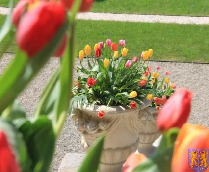 Kamieniecka Wiosna Tulipanów 2018 kronika (61)