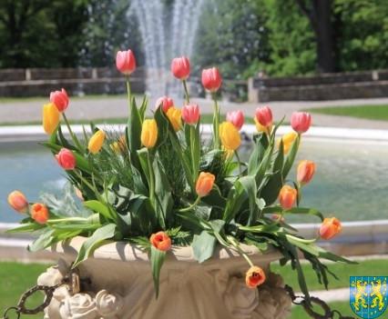 Kamieniecka Wiosna Tulipanów 2018 kronika (69)