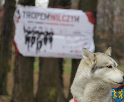 Bieg Tropem Wilczym bieg pamięci o najszlachetniejszych Polakach13