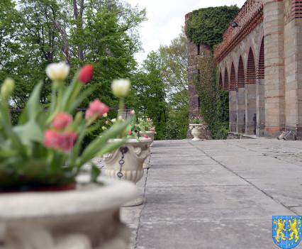 V Wiosna Tulipanów za nami148