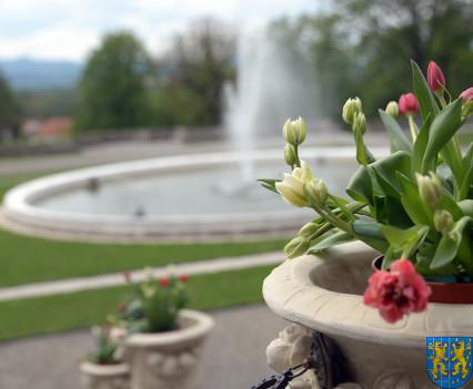 V Wiosna Tulipanów za nami149