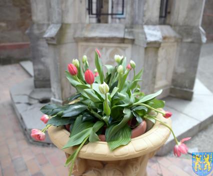 V Wiosna Tulipanów za nami169
