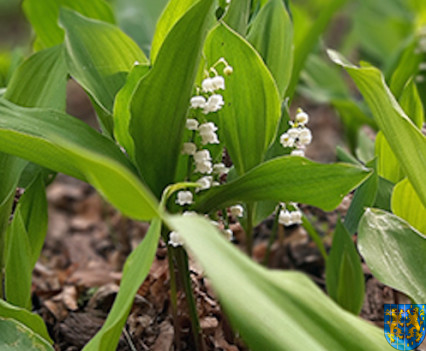 V Wiosna Tulipanów za nami172