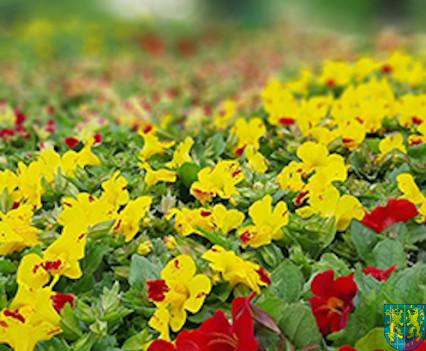 V Wiosna Tulipanów za nami173