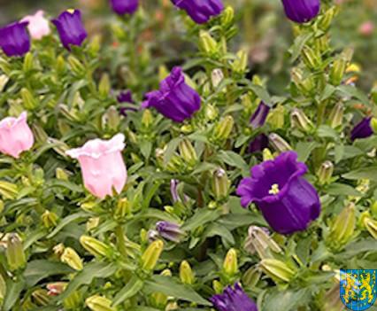 V Wiosna Tulipanów za nami174