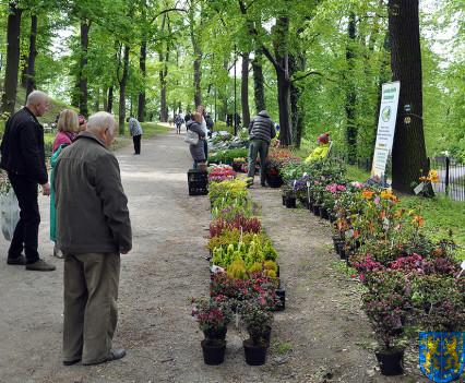 V Wiosna Tulipanów za nami175