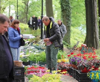 V Wiosna Tulipanów za nami50