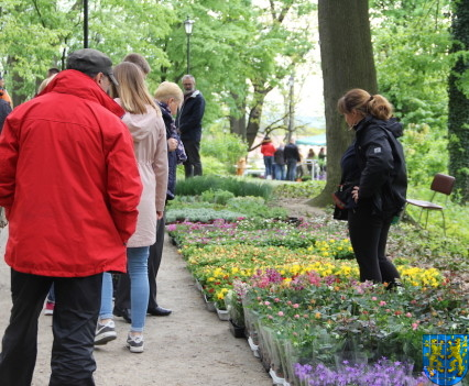 V Wiosna Tulipanów za nami57