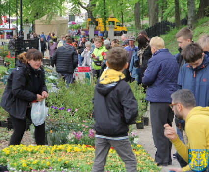 V Wiosna Tulipanów za nami58