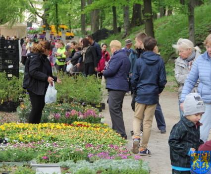 V Wiosna Tulipanów za nami59