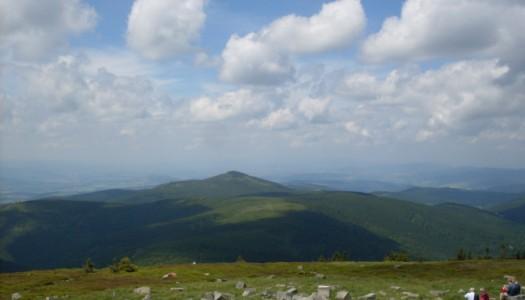 Wysoko w góry