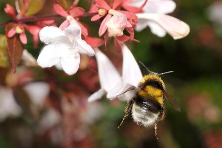 Pszczoły proszą o pomoc